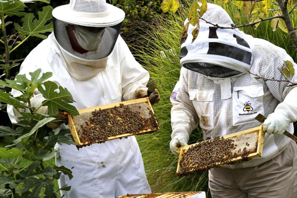 Beekeeping Supplies and Equipment